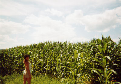 corn field in massachussettes 8/01